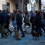 I cani protagonisti della processione degli animali a Cicciano (ph Daniela Cesarini)