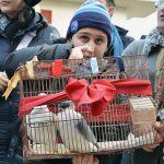 Uccelli portati per la benedizione degli animali a Cicciano (ph Martina D'Amodio)