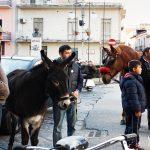 Cavalli e muli stanno per unirsi alla processione degli animali a Cicciano (ph Daniela Cesarini)