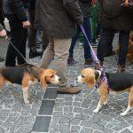 Incontro di cani nei tradizionali tre giri intorno alla chiesa di Sant'Antonio (ph Martina D'Amodio)