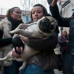 L'affetto dei ciccianesi per i loro animali domestici nella processione di Sant'Antonio (ph Daniele D'Ari)