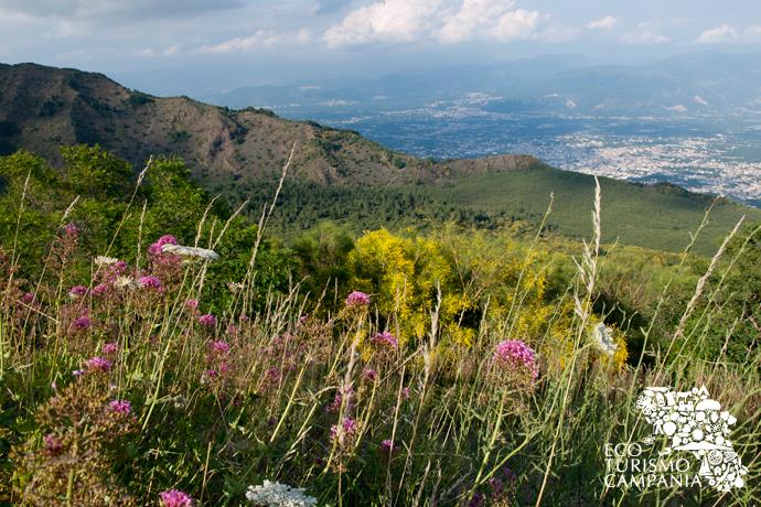 Panorama con la cresta del Monte Somma, Valle del Gigante e Valle dell'Inferno sul Vesuvio (ph Gianfranco Adduci)