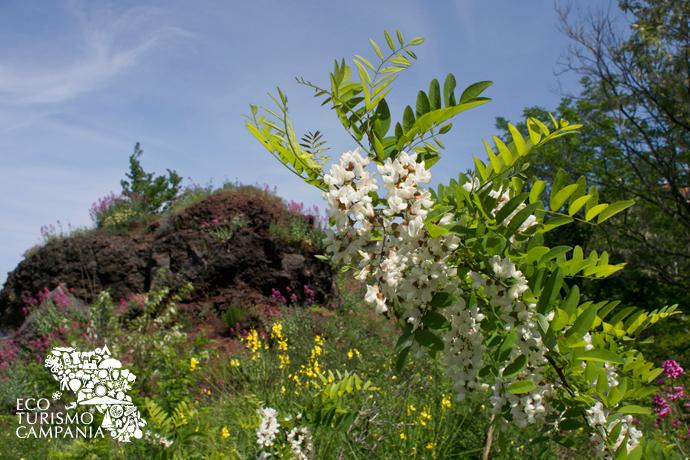 La flora del Carcavone in primavera (ph Gianfranco Adduci)