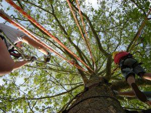 Ragazzi si allenano con il tree climbing sportivo