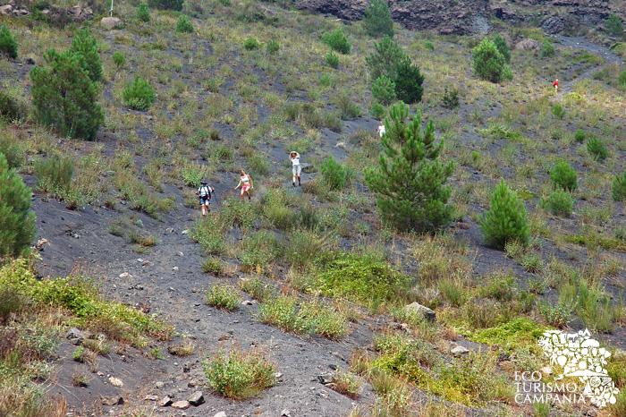 Escursione lungo i cognoli del Monte Somma- Vesuvio (ph Umberto Saetta)