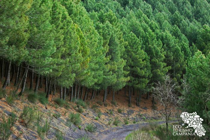 Sentiero tra i boshi del Monte Somma - Vesuvio (ph Umberto Saetta)