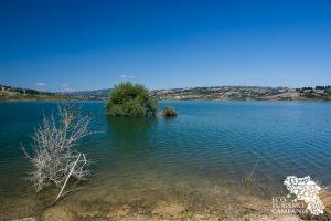 Bosco igrofilo Oasi WWF Lago di Campolattaro (ph Gianfranco Adduci)