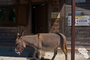 Centro Visite Oasi WWF Lago di Campolattaro (ph Gianfranco Adduci)