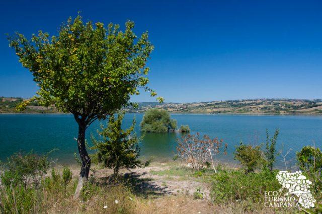 Oasi WWf Lago di Campolattaro (ph Gianfranco Adduci)