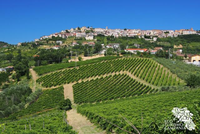 Panorama di Montefusco con i vigneti di Greco di Tufo docg (ph Gianfranco Adduci)