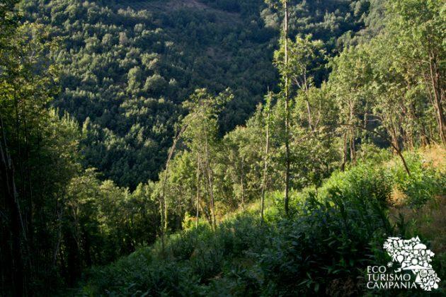 Panorama dei Surti, i boschi di Montefusco (ph Gianfranco Adduci)