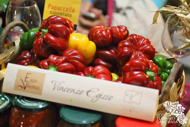 Le papaccelle napoletane coltivate da Vincenzo Egizio (foto di Mariana Silvana Dedu)
