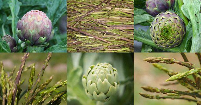 Sagre del carciofo e degli asparagi selvatici in Campania, weekend primo maggio 2017