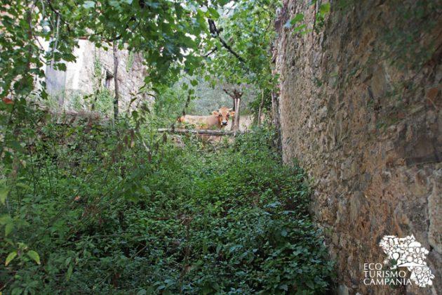 Animali e stalle nelle case del borgo agro-pastorale abbandonato di Roscigno vecchia (foto di Gianfranco Adduci)
