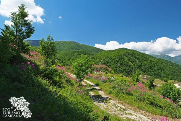 Sentieri con panorama sulla riserva Monti Eremita Marzano a Laviano (ph Gianfranco Adduci)