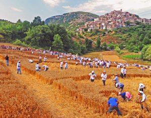 Il palio del grano a Caselle in Pittari