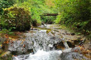 Torrente nel Parco di Roccamonfina - Foce del Garigliano