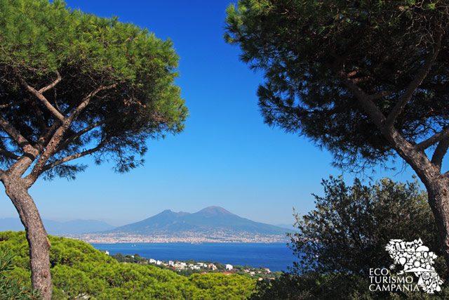 Vesuvio, panorama tra gli alberi di Napoli (ph Gianfranco Adduci)