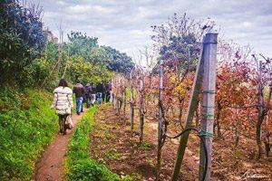 sentiero per il borgo Cappella a Bacoli