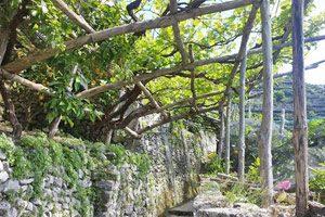 Un tratto del Sentiero dei Limoni in Costiera Amalfitana