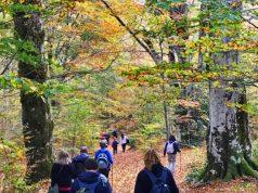 Escursione a Calabritto, boschi Piano Migliato
