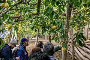 Giardino Sentiero dei Limoni