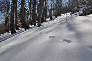 Snow tracking sul Massiccio del Matese