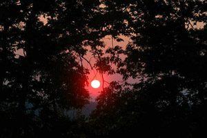 tramonto nella foresta rtegionale di Cuma