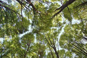 Forest bathing nel bosco dell'Oasi WWF di Pannarano