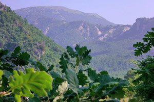 Panorama dal Monte Polveracchio