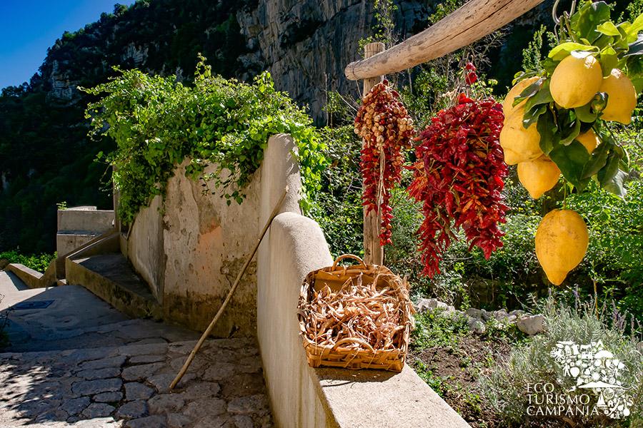Limone sfusato ed altri prodotti agricoli di Amalfi