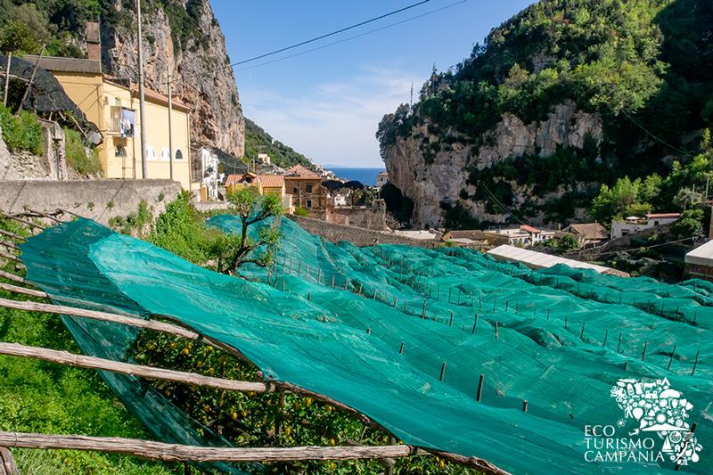 Limoneti coperti nella Valle dei Mulini ad Amalfi (ph Gianfranco Adduci)