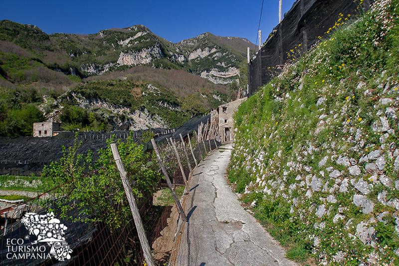 Una tipica macera lungo il percorso da Pontone alla Valle delle Ferriere (ph Gianfranco Adduci)
