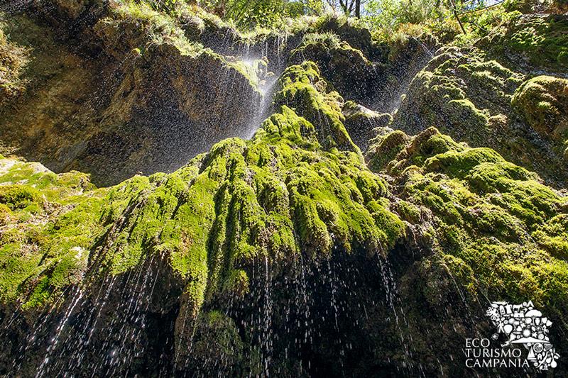 """Acqua in caduta lungo le pareti del muschio nella Riserva """"Valle delle Ferriere"""" (ph Gianfranco Adduci)"""