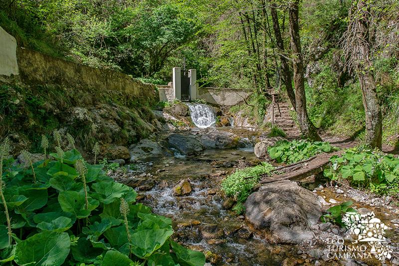 """Chiusa all'ingresso della Riserva Statale """"Valle delle Ferriere"""" (ph Gianfranco Adduci)"""